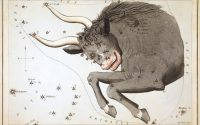 Taurus, the constellation.